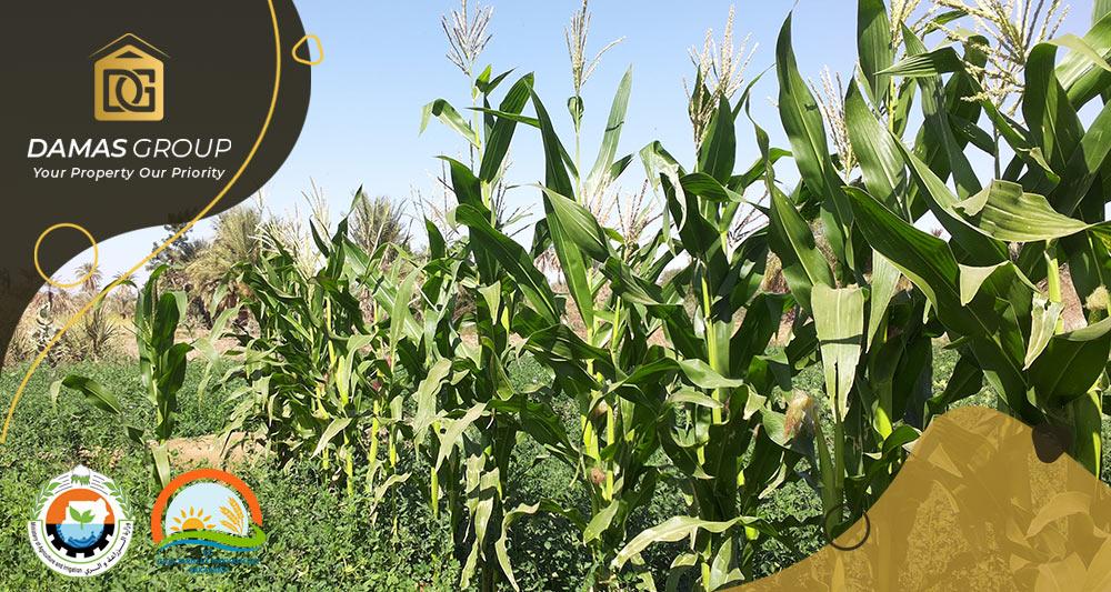 وزير تركي: الاستثمار التركي في قطاع الزراعة السوداني يبدأ عام 2019